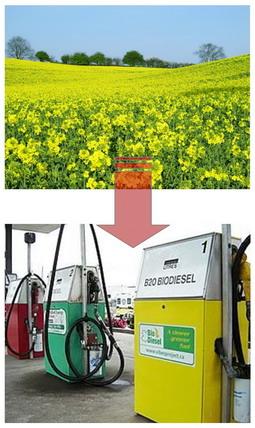 биоэнергетика украины