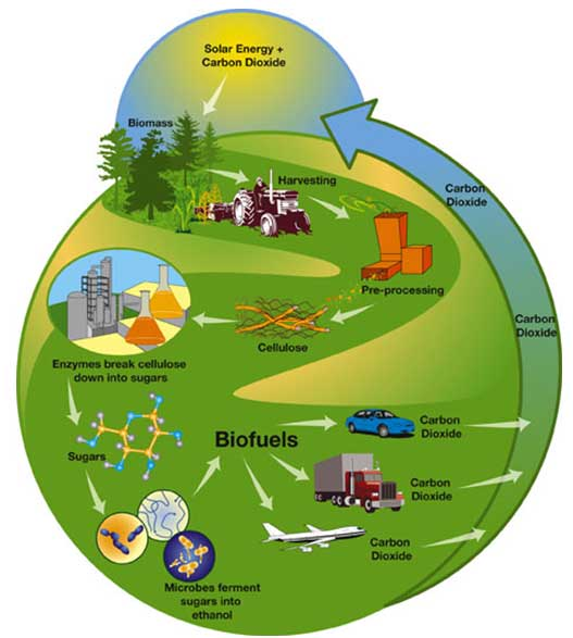 concepts for biofuel production model Towards algal biofuel production: a concept of green bio energy development baljeet singh saharan, deepansh sharma, ranjit sahua, ozlem sahinb, alan warrenc.